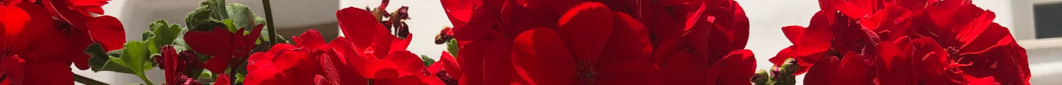 cropped-greekflowers.png